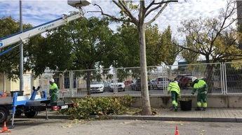 12.000 árboles, objetivo de la poda que comienza ahora en Albacete y finaliza el 31 de marzo