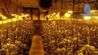 Dos detenidos y 6.016 plantas de cannabis incautadas en la provincia de Toledo