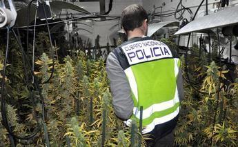 Detienen en Albacete a dos personas que cultivaban marihuana en un trastero, tras la denuncia de los vecinos