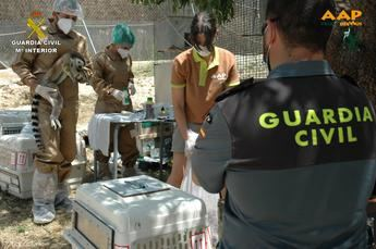 La Guardia Civil interviene doce especímenes de Lémur cola anillada que poseia un vecino de Nerpio (Albacete)