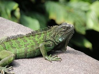 Comparte la vida con animales tan llamativos e inteligentes como los roedores y reptiles