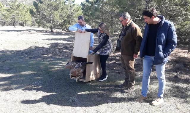 El monte 'Oriñuela', en San Pedro (Albacete), colabora en la recuperación y protección del Águila Imperial Ibérica