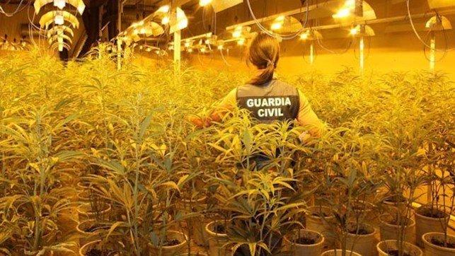 La Guardia Civil detiene a siete personas en Toledo con 3.080 plantas y 40 kilos de marihuana