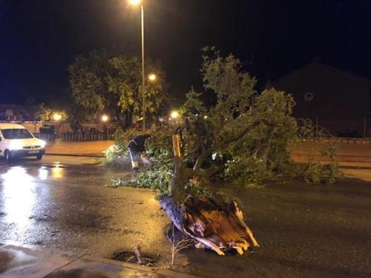 La tormenta en Alcázar (Ciudad Real) provoca numerosos desperfectos en el arbolado