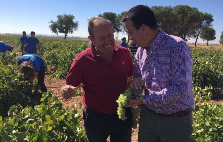 La vendimia de en Castilla-La Mancha tendrá una uva de mayor grado y será de entre 20 y 30 millones de hectolitros