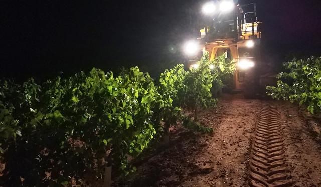 Asaja alerta a los agricultores de Castilla-La Mancha para que no entreguen uva sin contrato