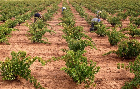 El anteproyecto de Ley de la Viña y del Vino, a información pública desde este miércoles y hasta el 7 de junio