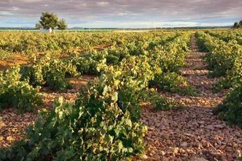 25.000 agricultores de Albacete recibe 41,7 millones de la PAC