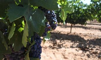 Castilla-La Mancha solicita la ampliación de las ayudas de la PAC hasta el 15 de junio