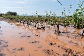 Castilla-La Mancha cifra en 45.000 las hectáreas de viñedo afectadas por las tormentas, 30.000 de ellas aseguradas
