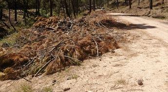 El PP de Villaverde de Guadalimar denuncia la falta de limpieza del monte por la acumulación de maleza seca y restos vegetales sin retirar